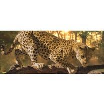 Fotobehang Jaguar, Dieren | Geel | 250x104cm