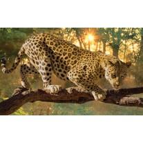 Fotobehang Papier Jaguar, Dieren | Geel | 368x254cm