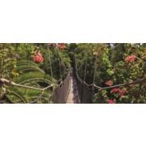 Fotobehang Bloemen, Natuur | Groen | 250x104cm