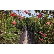 Fotobehang Papier Bloemen, Natuur | Groen | 368x254cm
