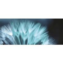 Fotobehang Bloemen | Blauw | 250x104cm