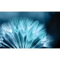 Fotobehang Papier Bloemen | Blauw | 368x254cm