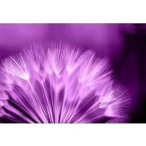 Fotobehang Papier Bloemen | Paars, Wit | 254x184cm