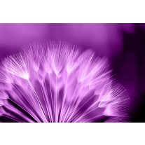 Fotobehang Papier Bloemen | Paars, Wit | 368x254cm