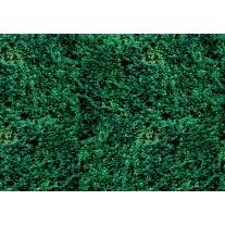 Fotobehang Papier Natuur | Groen | 254x184cm