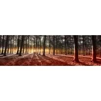 Fotobehang Vlies Bos   Groen, Geel   GROOT 832x254cm