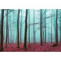 Fotobehang Papier Bos, Natuur | Blauw | 254x184cm