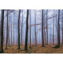 Fotobehang Papier Bos, Natuur | Bruin | 368x254cm