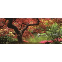 Fotobehang Boom | Bruin, Rood | 250x104cm