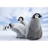 Fotobehang Papier Pinguïn, Dieren | Grijs | 254x184cm