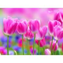 Fotobehang Papier Bloemen, Tulpen | Roze | 254x184cm