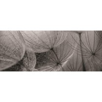 Fotobehang Bloemen | Grijs | 250x104cm