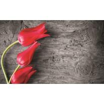 Fotobehang Papier Bloemen, Tulp | Rood | 368x254cm