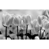 Fotobehang Papier Bloemen, Tulpen | Grijs | 254x184cm