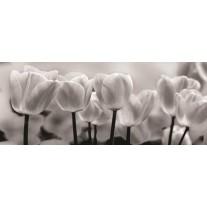 Fotobehang Bloemen, Tulpen | Grijs | 250x104cm