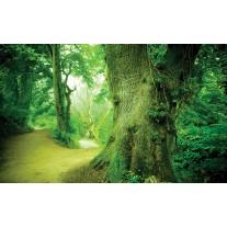 Fotobehang Boom | Groen | 152,5x104cm