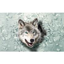 Fotobehang Papier Wolf, Muur | Grijs, Groen | 254x184cm