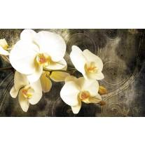 Fotobehang Papier Orchidee, Bloemen | Geel | 368x254cm
