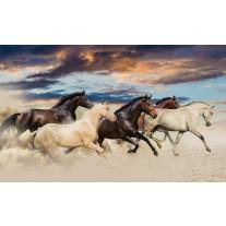 Fotobehang Papier Paarden | Crème, Blauw | 368x254cm