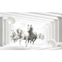 Fotobehang Papier Paarden, Modern | Wit | 254x184cm