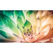 Fotobehang Papier Bloem, Modern | Groen | 368x254cm
