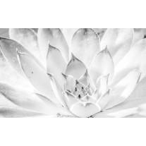 Fotobehang Papier Bloem, Modern | Wit | 368x254cm