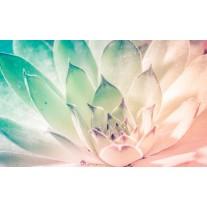 Fotobehang Bloem, Modern | Turquoise | 152,5x104cm