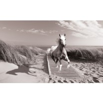 Fotobehang Papier Paard, Strand | Grijs | 368x254cm