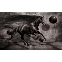 Fotobehang Papier Paard, Design | Zwart | 368x254cm