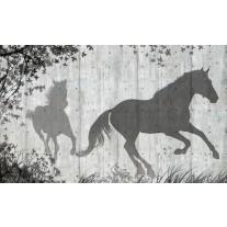 Fotobehang Papier Paarden, Modern | Grijs | 368x254cm