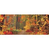 Fotobehang Bos, Herfst | Oranje | 250x104cm