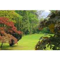 Fotobehang Papier Natuur | Groen, Bruin | 254x184cm