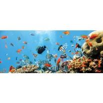 Fotobehang Natuur, Vissen | Blauw | 250x104cm