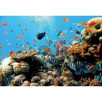 Fotobehang Natuur, Vissen | Blauw | 104x70,5cm