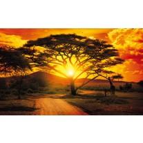 Fotobehang Papier Natuur, Boom | Oranje | 254x184cm