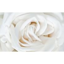 Fotobehang Papier Bloemen, Roos   Wit   254x184cm