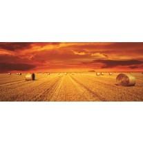 Fotobehang Natuur | Oranje | 250x104cm