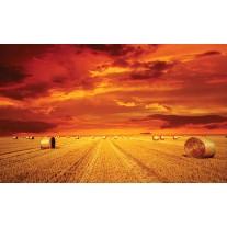 Fotobehang Papier Natuur | Oranje | 368x254cm