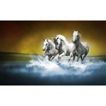 Fotobehang Papier Paarden | Blauw, Wit | 254x184cm