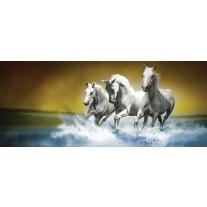 Fotobehang Paarden | Blauw, Wit | 250x104cm
