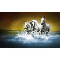 Fotobehang Papier Paarden | Blauw, Wit | 368x254cm