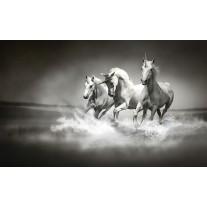 Fotobehang Papier Paarden | Zwart, Wit | 368x254cm