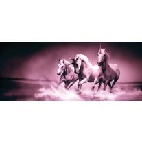 Fotobehang Paarden | Paars | 250x104cm