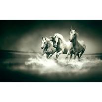 Fotobehang Papier Paarden | Grijs, Groen | 254x184cm