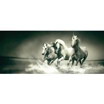 Fotobehang Paarden | Grijs, Groen | 250x104cm