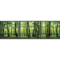 Fotobehang Vlies Bos, Natuur   Groen   GROOT 832x254cm