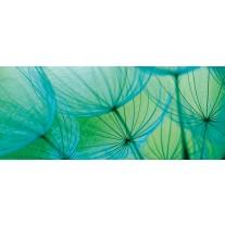 Fotobehang Abstract   Groen   250x104cm