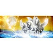 Fotobehang Paarden | Blauw, Geel | 250x104cm