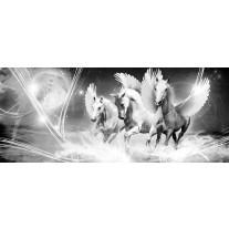 Fotobehang Paarden | Grijs | 250x104cm