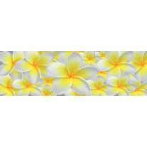 Fotobehang Vlies Bloemen | Geel, Wit | GROOT 624x219cm